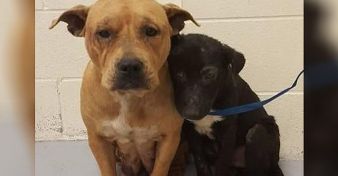 Scared and neglected pit bulls were brought in, only to give them this life-changing moment