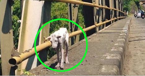 This Desperate Dog Jumped Into A Stranger's Car. Where It Took Her Changed Her Life Forever…