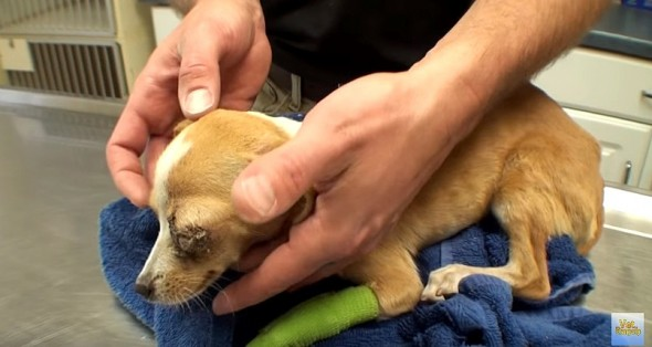 Homeless Puppy Bound to Die Is Given Her First Real Chance at Life