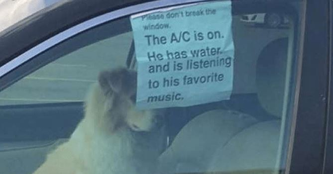 Man leaves his dog behind in a car but he had no idea THIS would get viral!