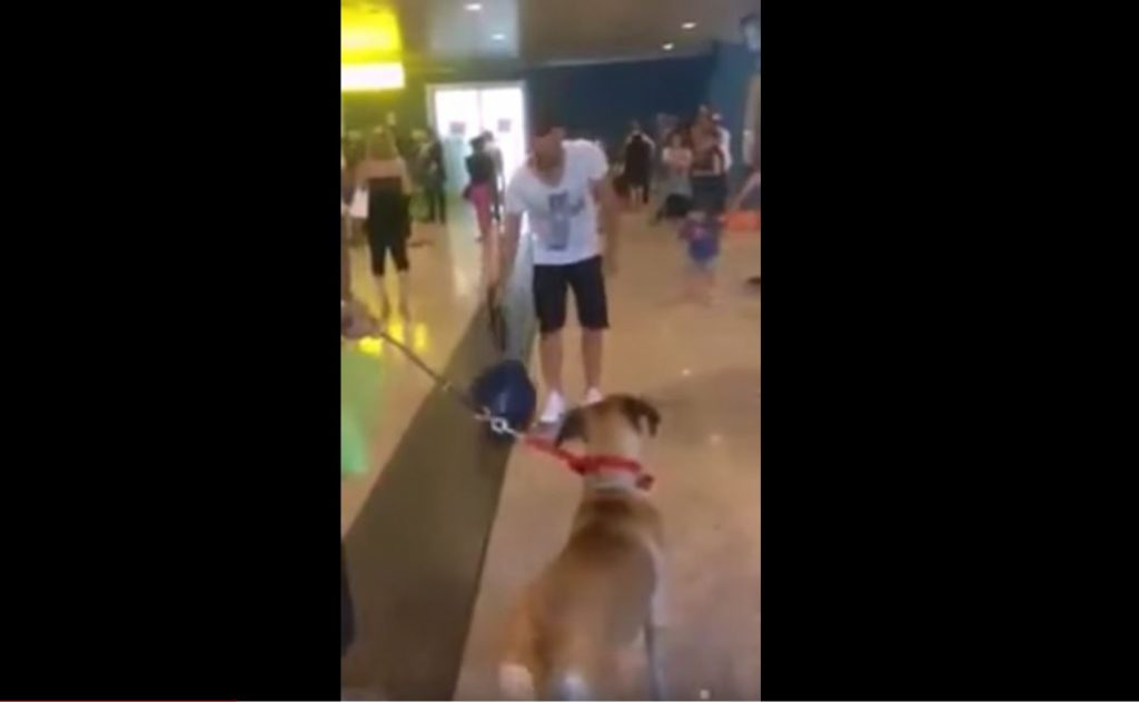 Dog going crazy when he see his owner after 3 years
