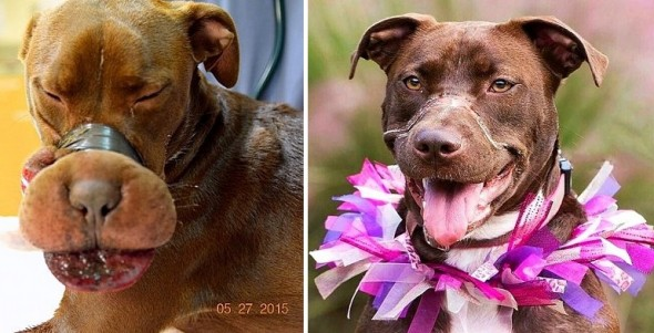 Caitlyn, the Dog Found With Her Muzzle Taped, One Year Later