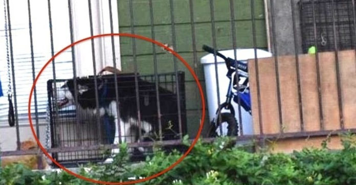 She Tried To Save A Dog's Life Through Facebook. What She Ended Up Doing Instead? OMG.