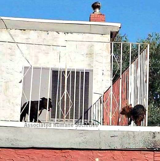 Dogs Forced to Live on a Roof Rescued from the Bubbling Tar