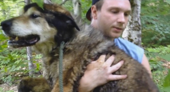 Sweet, Ailing Senior Lost in Woods Reunited with Grateful Dad
