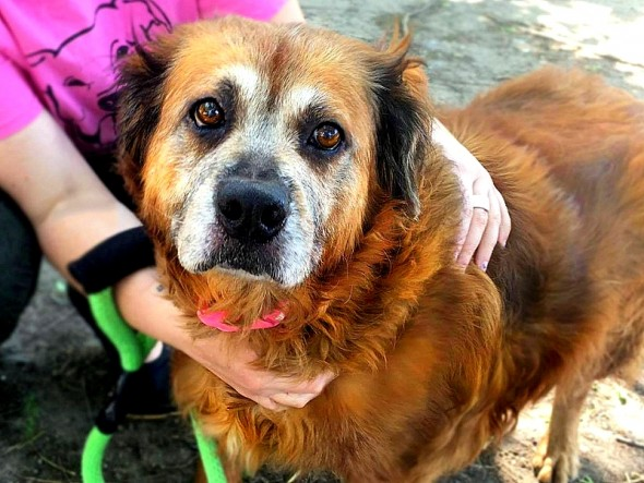 Devoted Elderly Dog Who Stayed by Dead Owner for Three Days Finds New Family to Love