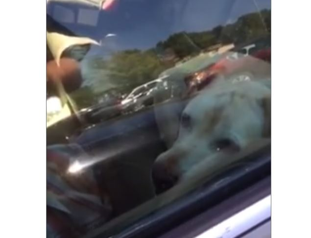 Police Make Video of Officers Rescuing an Elderly Dog from a Hot Car