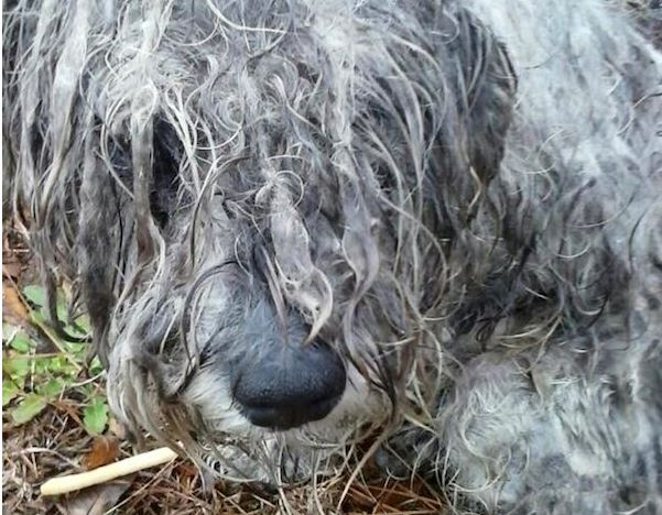 He Was Found Beaten, Starved, Neglected & Tied To A Tree. But Watch What She Did To Him…