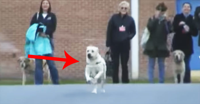 They Bring The Dog To Prison, And He Takes Off Running. Where He Goes? OMG