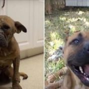 On The Verge Of Euthanasia, This Once Hopeless Pup Gets A Second Chance!