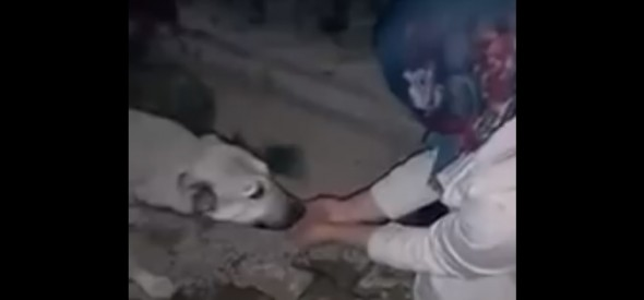 Dog's Reaction to Woman's Kindness Will Warm Your Heart