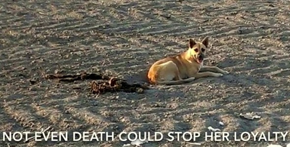 Heartbreaking Rescue of a Dog Who Refused to Leave Fallen Friend's Remains