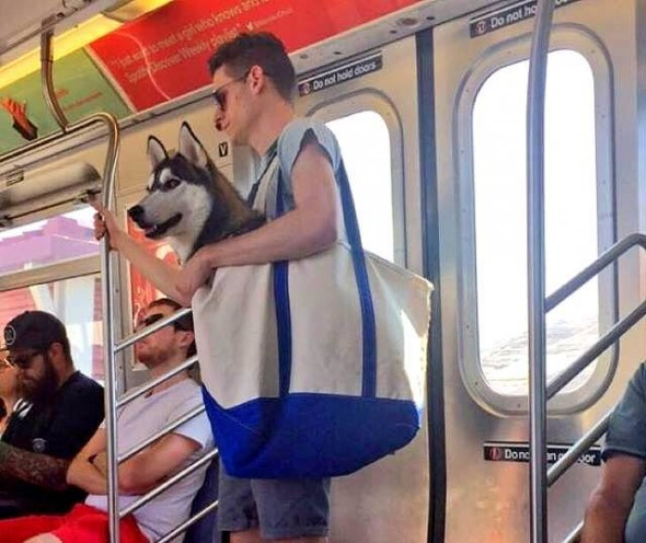 Man Put Large Dog in Even Larger Bag When Traveling to Cheer People Up