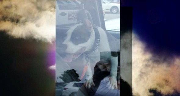 Pit Bull Rescued from Hot Car at Columbus Zoo