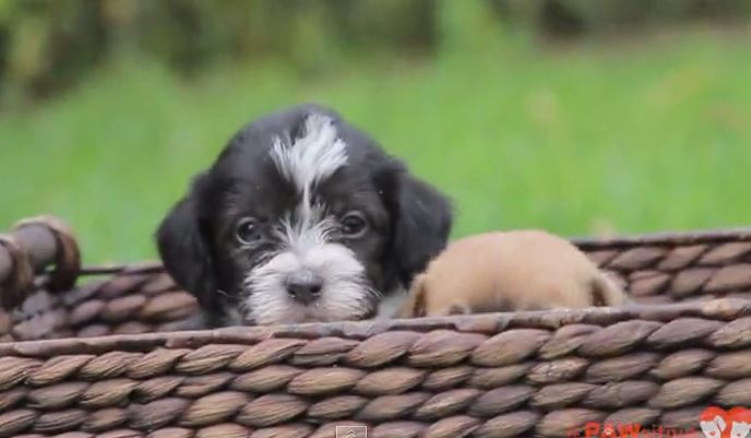 These Rescue Pups Will Teach You An Important Lesson About Life's Little Wonders