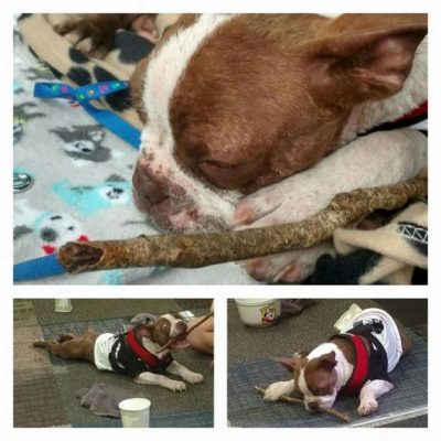 The Officer Who Didn't Press Charges Against This Dog's Abusers Has Faced Justice