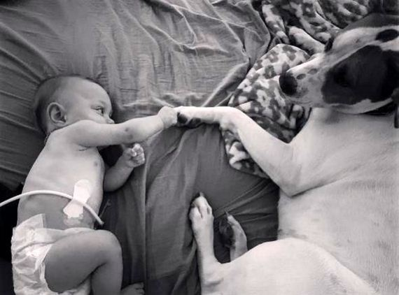 01-Rescue-Dog-in-Love-With-His-Baby-Sister