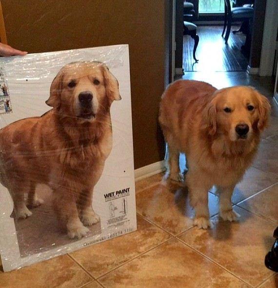 03-Cardboard-Dog