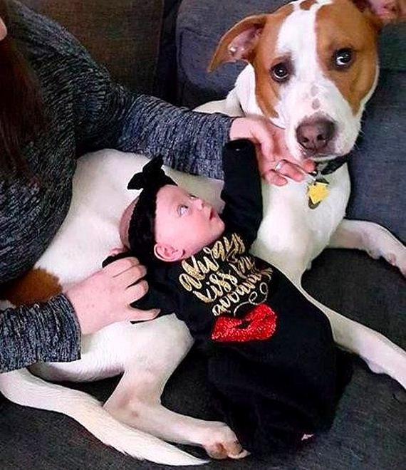 07-Rescue-Dog-in-Love-With-His-Baby-Sister