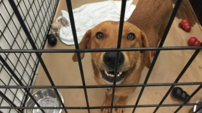 PAWS Chicago Takes in 26 Rescues from Louisiana to Prevent Euthanizing Them