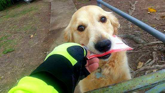 Mailman Writes Little Letters to Dog on His Route Who Loves Getting Mail