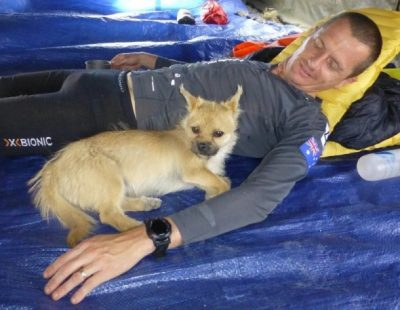 PUPDATE: Gobi Has Been Found Alive and Well, Returned to New Human Dad!