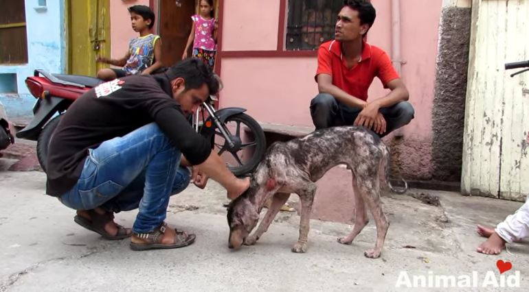 This Dog Was Suffering From Mange, But One Month Later, He's Almost Unrecognizable
