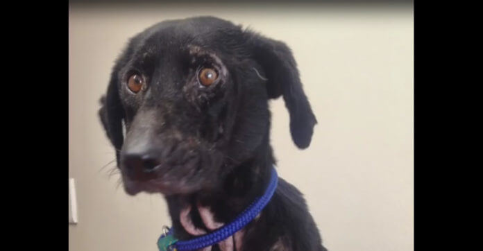 She Was Dumped Because Of Her Ugliness. 3 Weeks Later She Finds Her Perfect Home