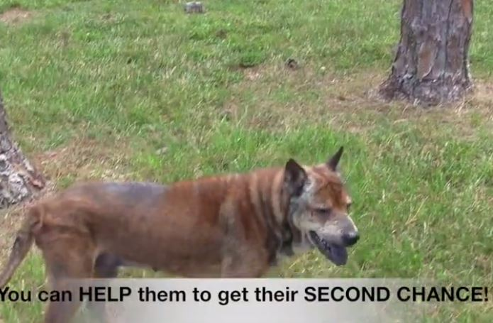 Dogs rescued from abusive owner get second chance