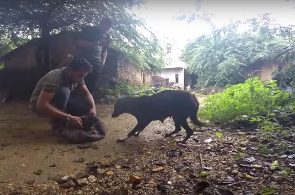 A Dog Was Trapped In This Hut, But Luckily, These Heroes Were Quick To The Rescue