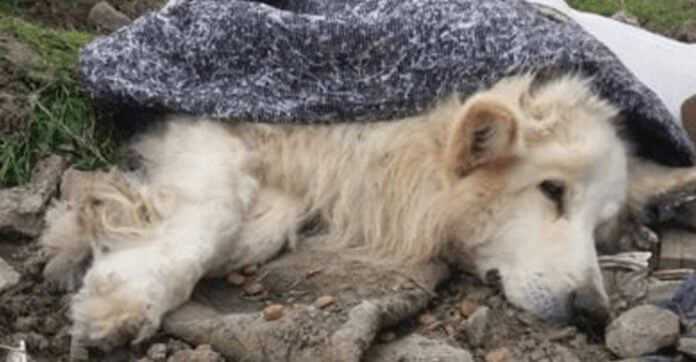 Dying Dog Found Wrapped In Carpet In Pile Of Garbage