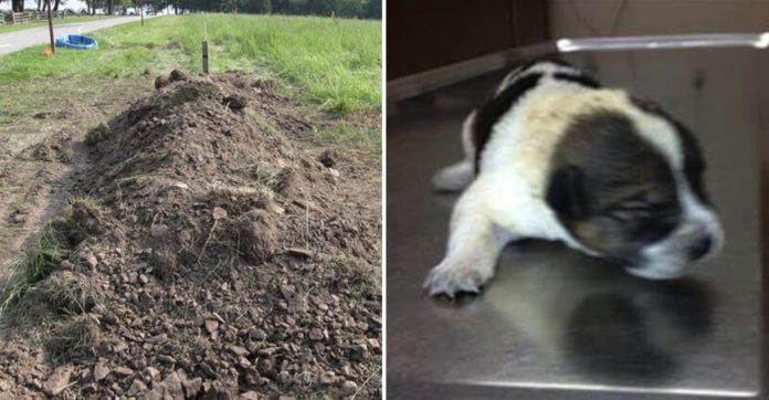 Puppy Found Buried Alive In 6 Inches Of Dirt