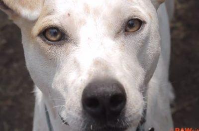 Good Samaritan Walks 3 Miles to Save Dog Tied To Pole