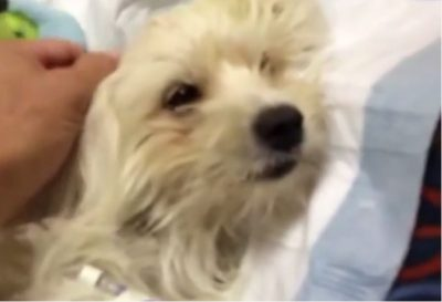 This Dog Was On The Brink Of Death. What Follows Is Truly Miraculous.