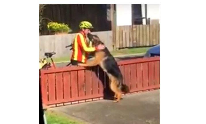 Mailman Befriends Lonely, Misunderstood Dog, Breaking Established Stereotypes