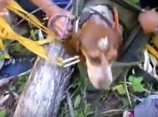 She Was Trapped And Starving, But Watch What Happened When They Showed Up