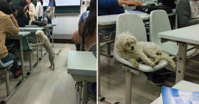 Dog Attended Class Everyday, But One Day He Didn't Show Up. Where They Found Him? OMG.