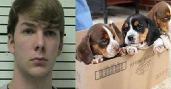 Monster Teens Accused Of Beheading 3 Stray Puppies Have Been Arrested