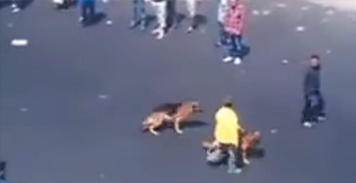 Punk Decides It Would Be Funny To Throw Bricks At Two Innocent Dogs. Then THIS Happens.