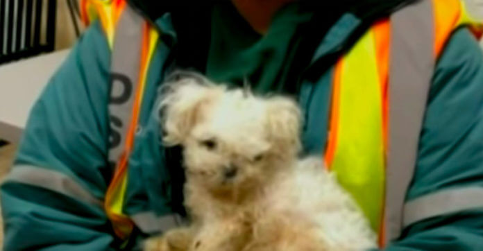 Sanitation Worker Finds An Abandoned Dog After Looking Inside A Moving Trash Bag