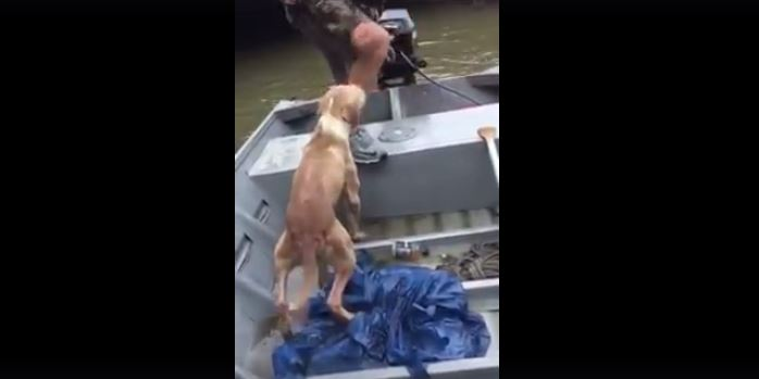 This Poor Dog Surely Would Have Died In The Floods If It Weren't For These Men