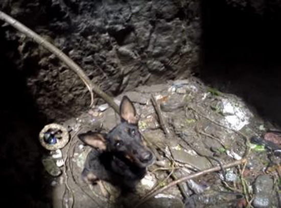 When You See This Dog's Reaction To Her Rescuers, It Will Bring Tears To Your Eyes
