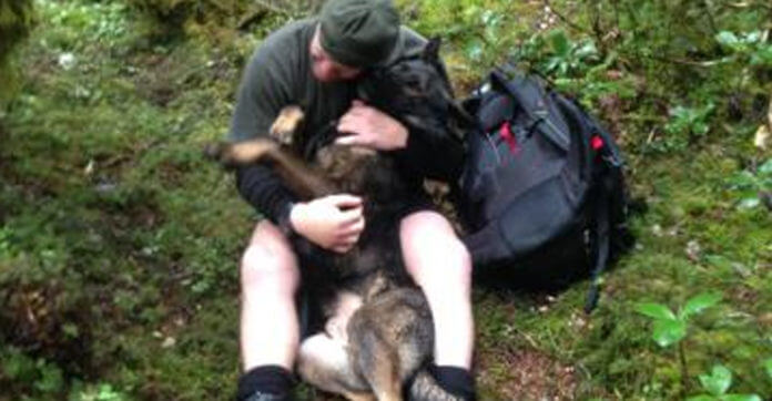 This Dog Got Lost In The Woods. But When His Handler Finds Him? Oh My!