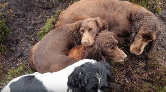Heroes Emerge From Muddy Pipe With Dog Who'd Gone Missing