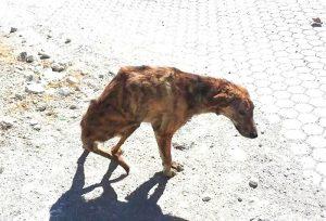 01-woman-finds-dog-broken-spine-greece