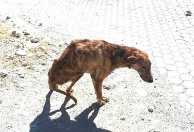 Woman On Holiday Finds A Dog With Broken Spine, Takes Him Home From Greece To Holland