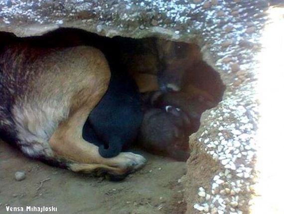 02-story-behind-the-dog-who-dug