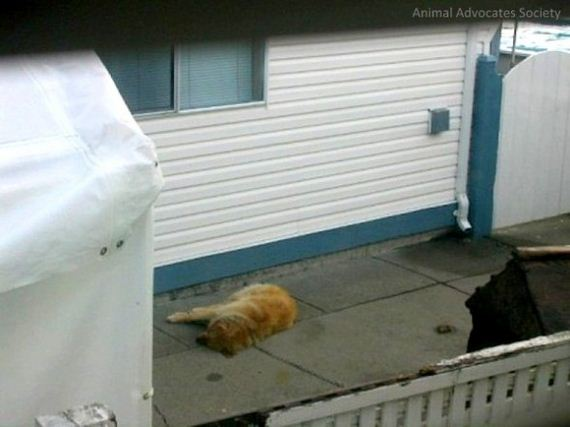 03-Neighbors-Save-Alfie