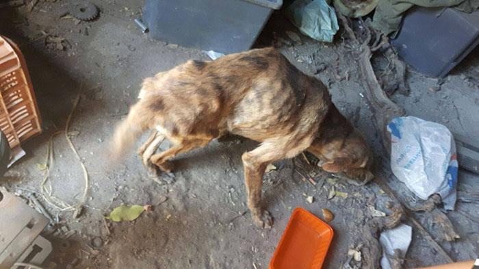 03-woman-finds-dog-broken-spine-greece