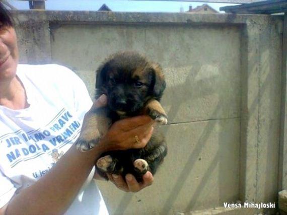 06-story-behind-the-dog-who-dug